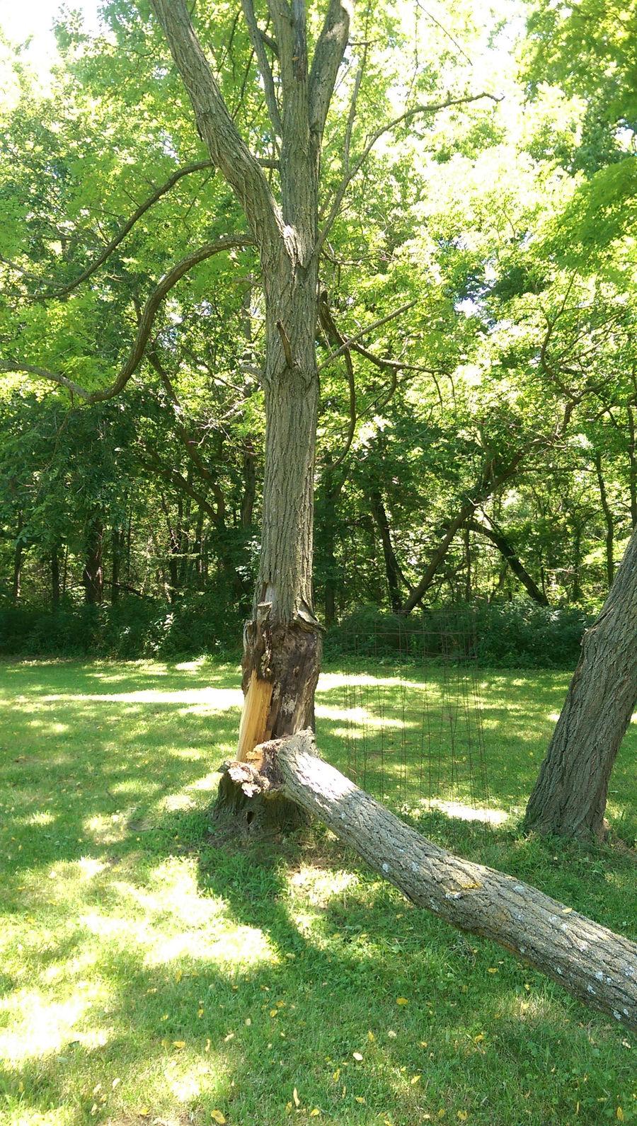 Photo of 20160805_Trees