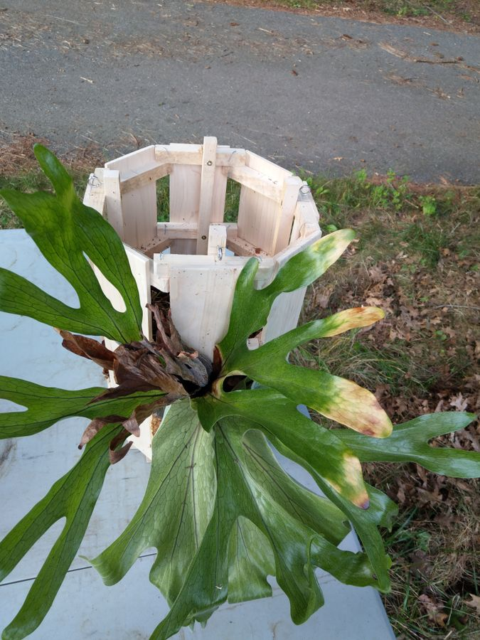 Photo of Staghorn Fern Planter