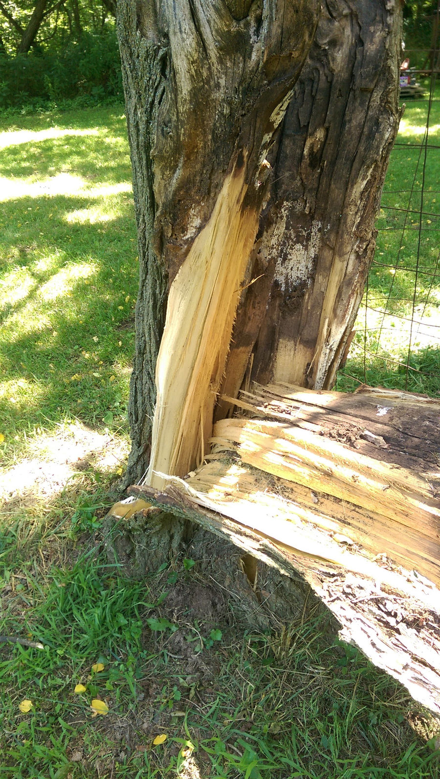 Photo of Unknown_Wood